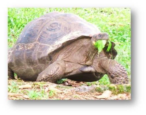 Even Turtles Take Laxatives